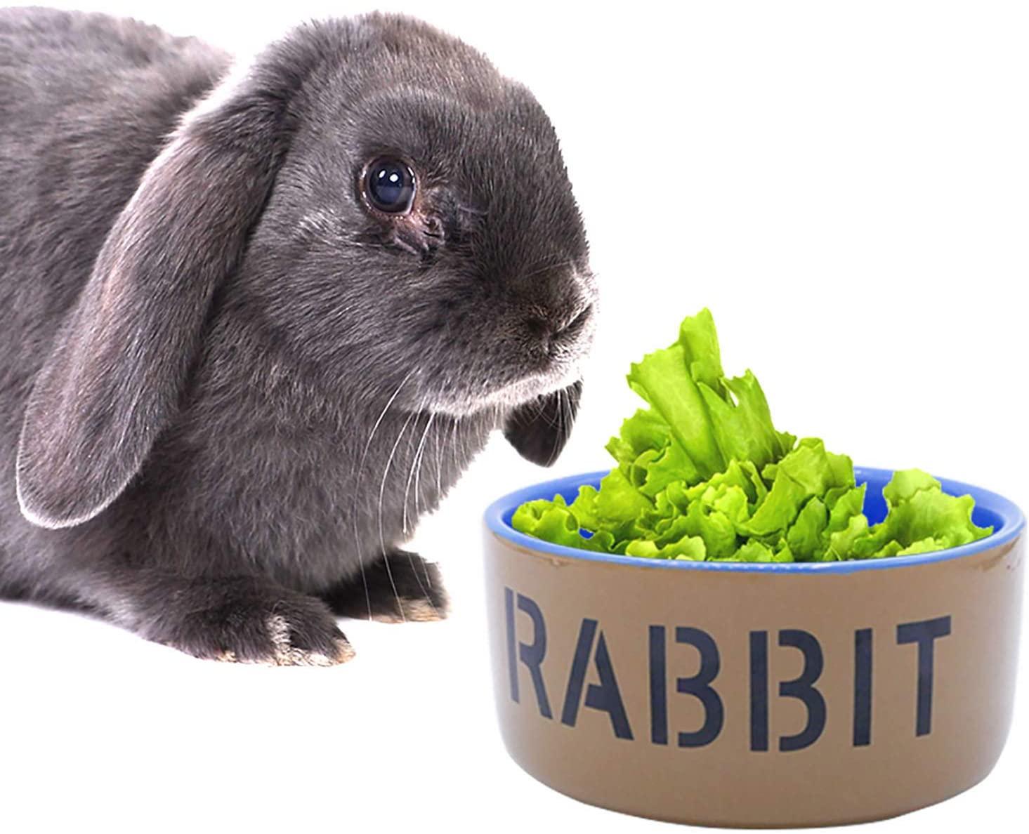 gamelle céramique lapin accessoire