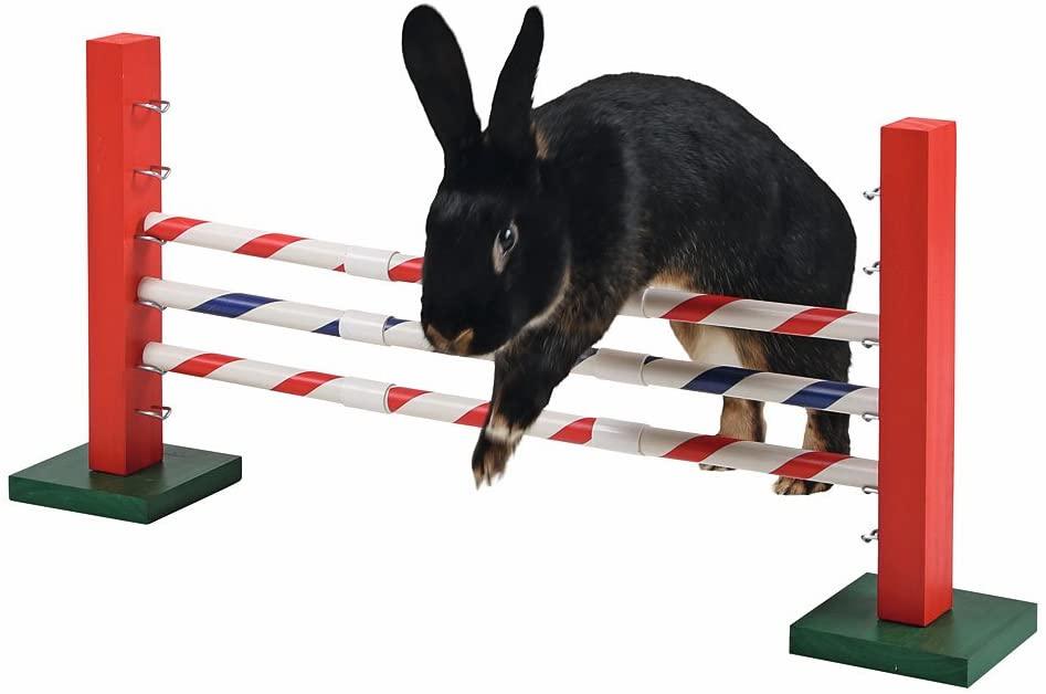 saut obstacle jeux lapins
