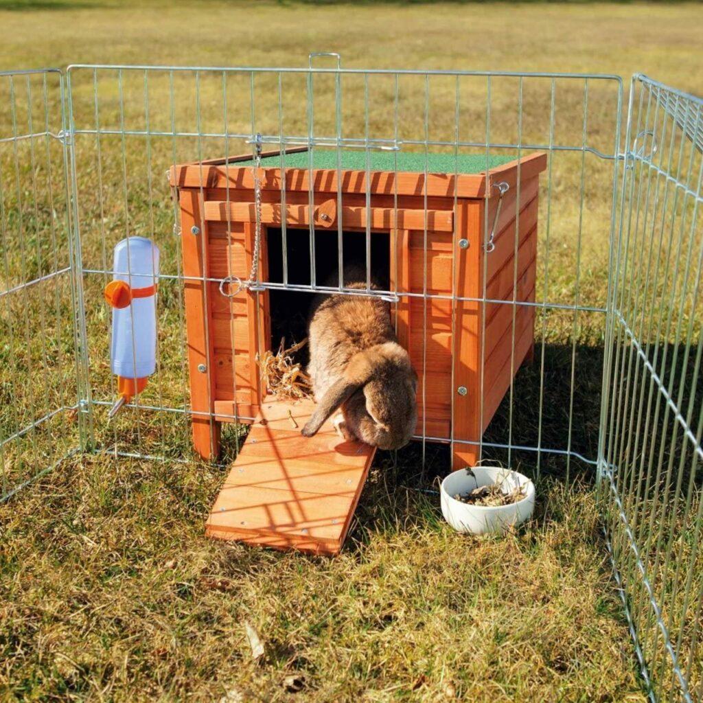 habitat bois lapin nain