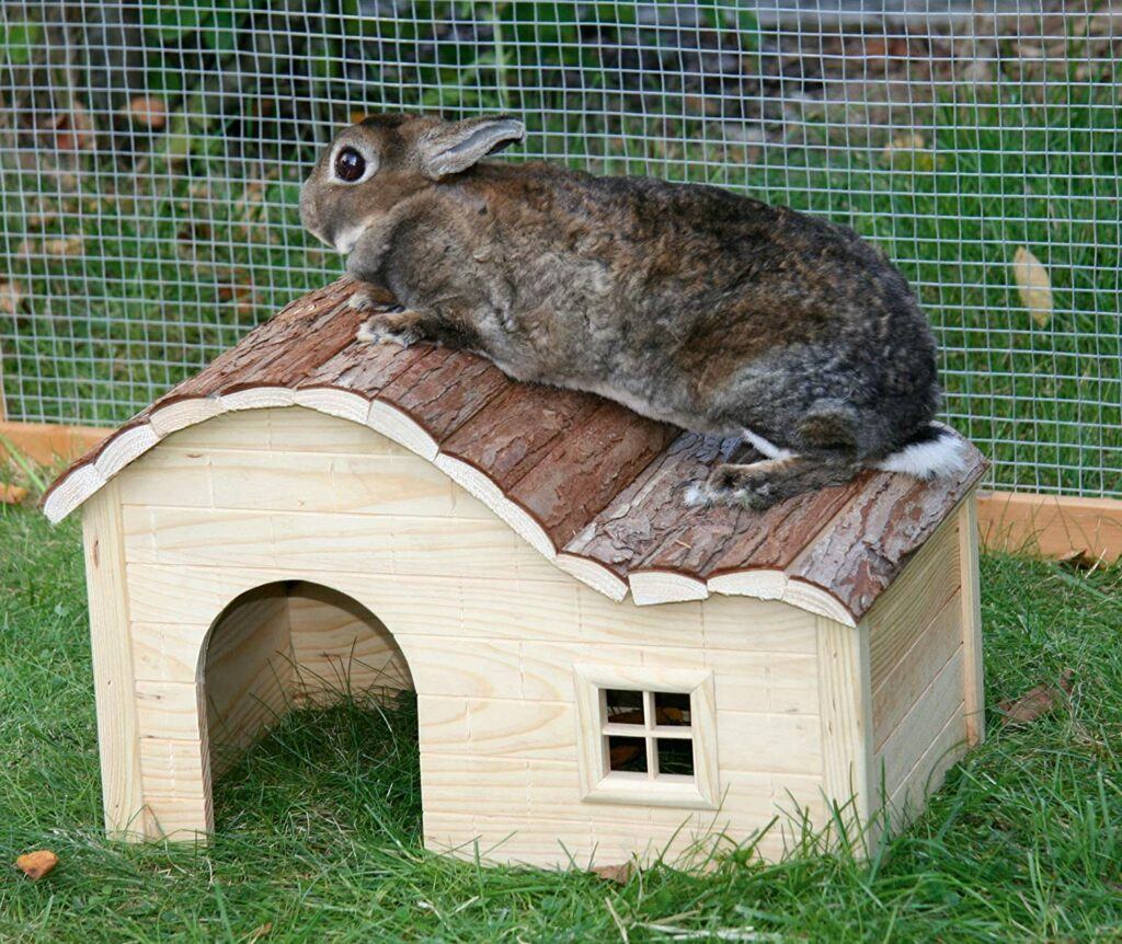 maison lapin nain kerbl bois